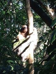 sloth2